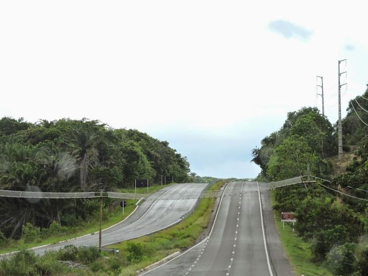Một cây cầu thủ công được người dân dựng lên giúp những chú khỉ dễ dàng qua đường tại Bahia, Brazil.