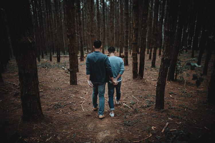 Cầm tay nhau đi vào rừng thông…