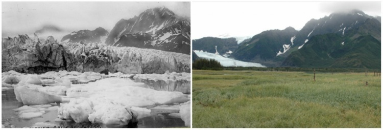 Ảnh chụp sông băng Pedersen (Alaaska, Mỹ) vào mùa hè năm 1917 (trái) và mùa hè 2005 (phải). Lòng sông 100 năm trước giờ đã khô cạn và trở thành cánh đồng cỏ.