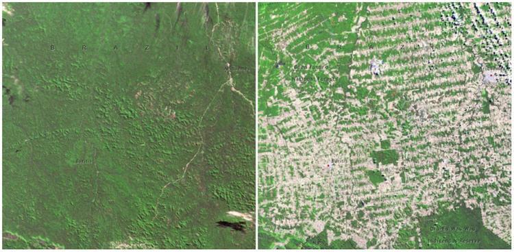 Rừng Rondonia, Brazil từ tháng 6/1975 đến tháng 8/2009. Bạn thấy thế nào về sự thay đổi đáng sợ này?