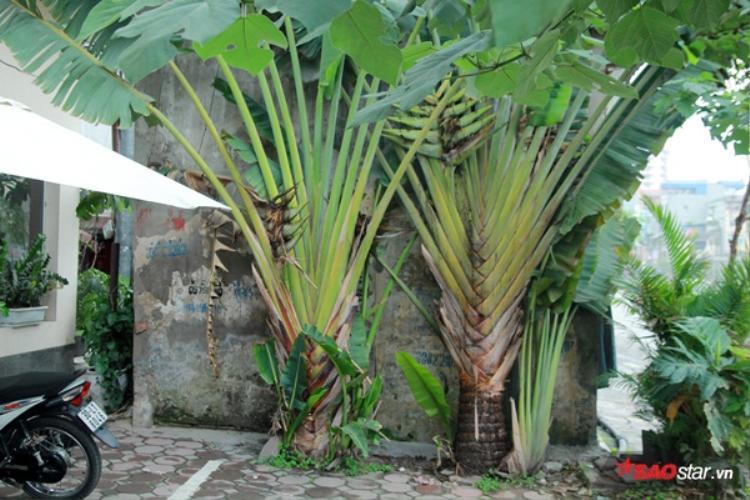 Nhiều cây cảnh trồng xung quanh ngôi nhà dị thường.