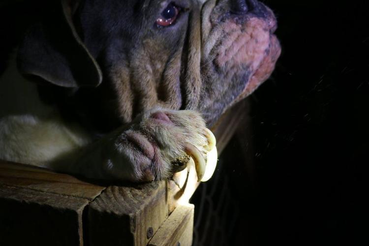 Nhiều chú chó đã mắc các bệnh về da, mắt nặng.