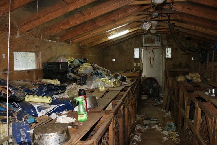 Toàn cảnh khu chứa động vật vô cùng mất vệ sinh.