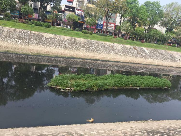 Chú chó tội nghiệp bị chủ nhân thẳng tay vứt xuống sông Tô Lịch sau khi khám bệnh.