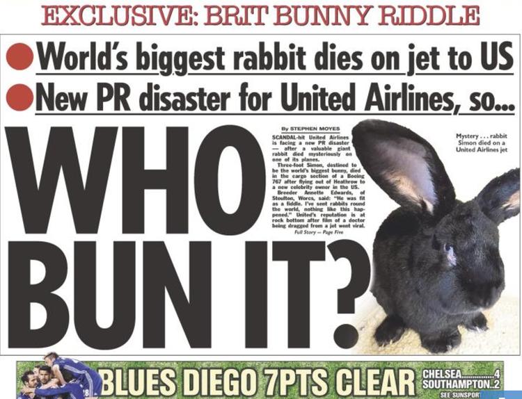 Sự mất tích bí ẩn của chú thỏ lớn nhất thế giới trên máy bay United Airlines