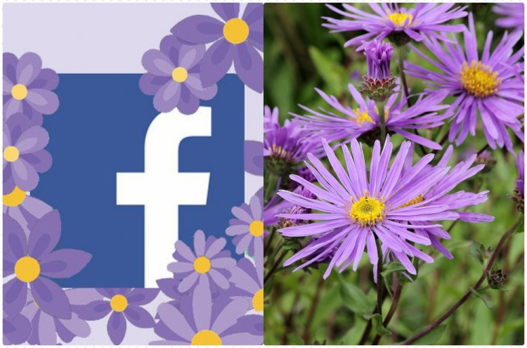 Giải oan cho biểu tượng hoa tím đang gây bão mạng xã hội của Facebook