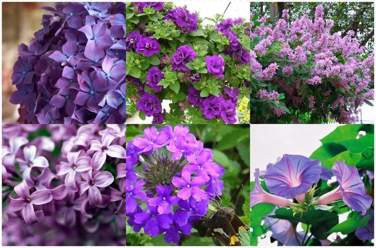 Bằng lăng, bìm bìm, dạ yến thảo, tử đinh hương, cẩm tú cầu,… cũng là những loại hoa màu tím rất đẹp, có hình dáng dễ khiến chúng ta liên tưởng đến biểu tượng hoa của Facebook.