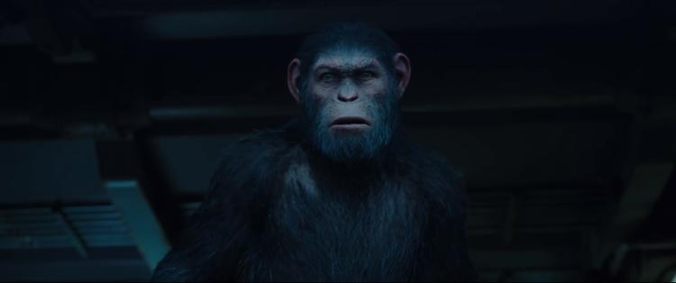 Cuộc chiến giữa khỉ và người sẽ đi đến hồi đỉnh điểm: hoặc là loài khỉ chết, hoặc là loài người chết.