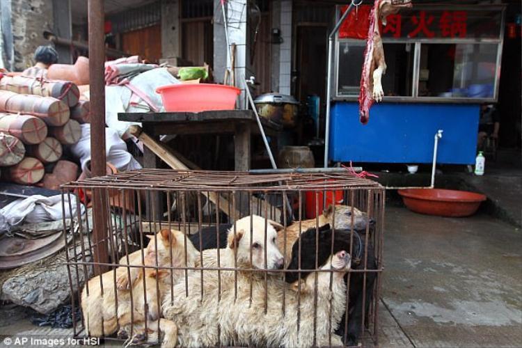 Cấm bán thịt chó là tin cực vui với những người yêu động vật ở Trung Quốc.