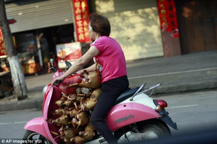 Thịt chó là món ăn yêu thích của nhiều người châu Á, trong đó có Trung Quốc. Ở đất nước đông dân nhất thế giới, người ta tin rằng ăn thịt chó vào mùa đông sẽ giúp cơ thể được giữ ấm bởi tính nóng có trong thịt.