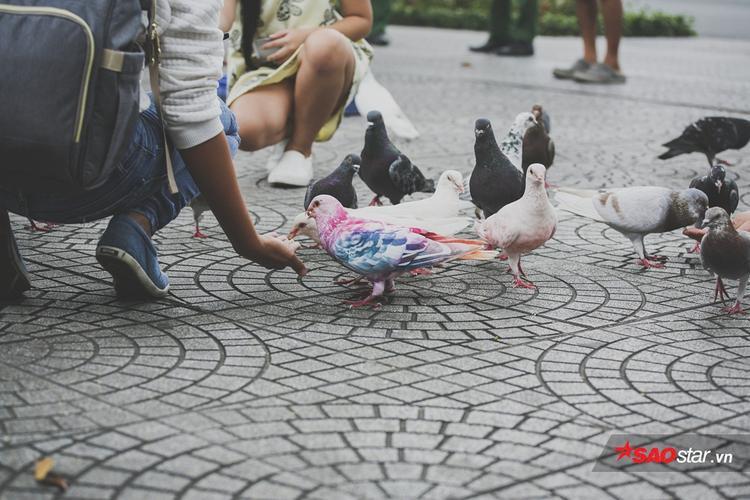 Những chú chim mang màu sắc rực rỡ, nổi bật giữa đàn.