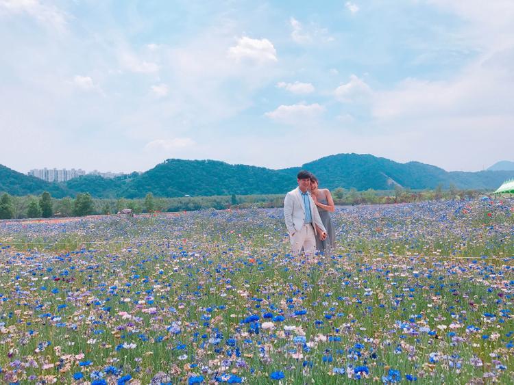 Cánh đồng hoa thơ mộng sẽ là một trong những bối cảnh của bộ phim điện ảnh Hàn - Việt mà Lý Hải đồng đạo diễn.