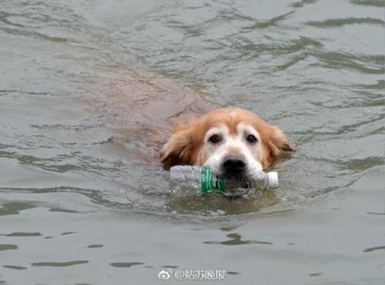 Với người dân thành phố Tô Châu hình động của chú chó này không còn xa lạ.