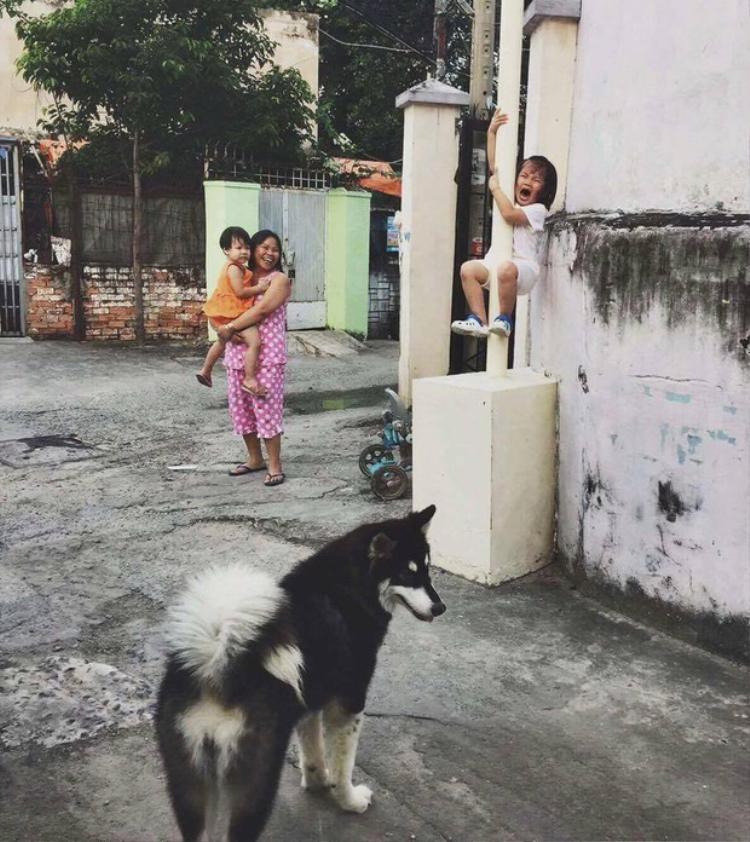 Bức ảnh cực hot mạng xã hội: Bé gái khóc thét, leo tót cột điện vì sợ chó