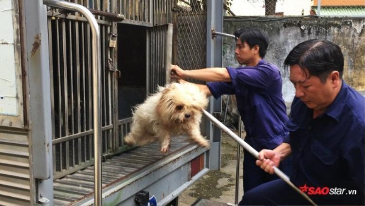 Đội trưởng đội bắt chó thả rông: Nhiều chủ chó chửi bới, trù ẻo con chúng tôi khi sinh ra bị dị tật