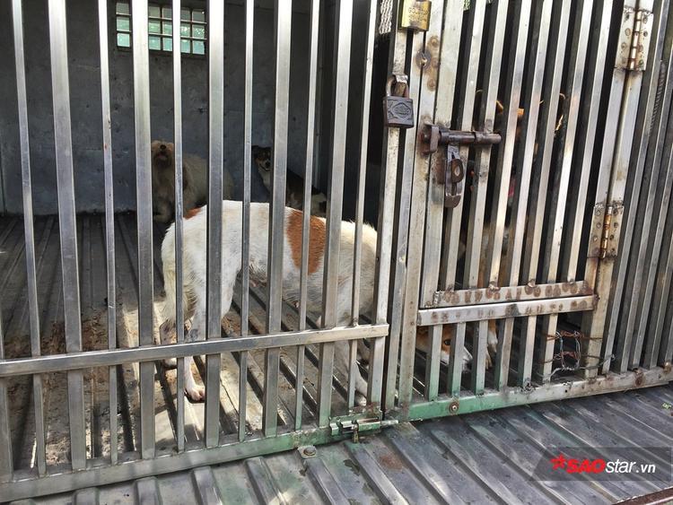 Những chú chó được đội bắt về từ ngày 13/9.