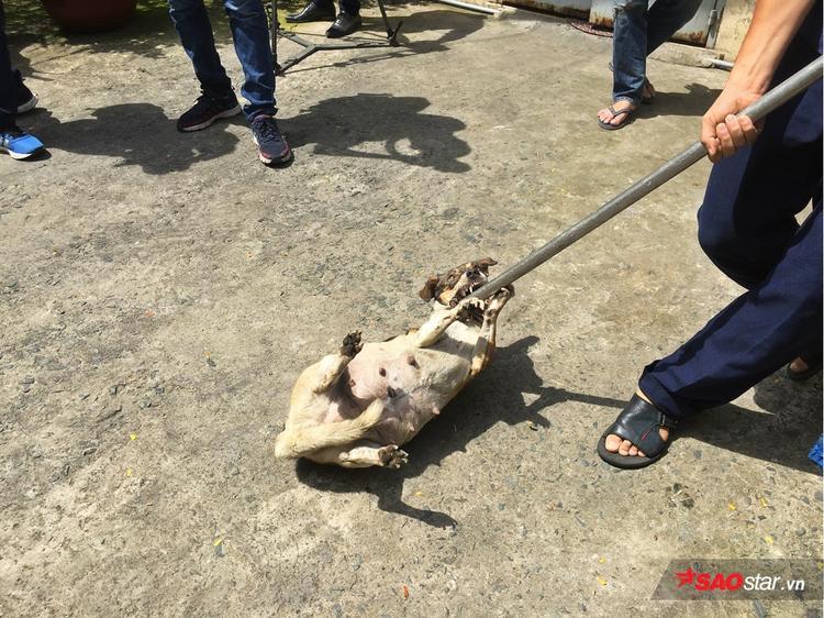 Chú chó chống cự khi bị cho vào chuồng.