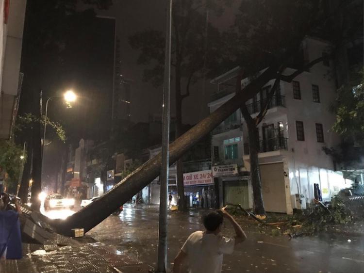 Ngoài ra, gió lớn còn làm một cây cổ thụ trên đường Nguyễn Thái Bình, quận 1 bị bật gốc. Ảnh: V.H.T