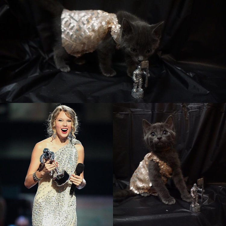 Taylor có váy kim tuyến lấp lánh lệch vai, Favacũng phải tỏa sáng với thiết kế giống hệt. Tuy không nguyên vẹn chất liệu lắm nhưng không sao, đảm bảo đủ độ lung linh và tinh thần sexy gợi cảm là được! Chưa hết, phải sản xuất luôn cả chiếc cúp mini để bằng chị bằng em mới đủ bộ nha.