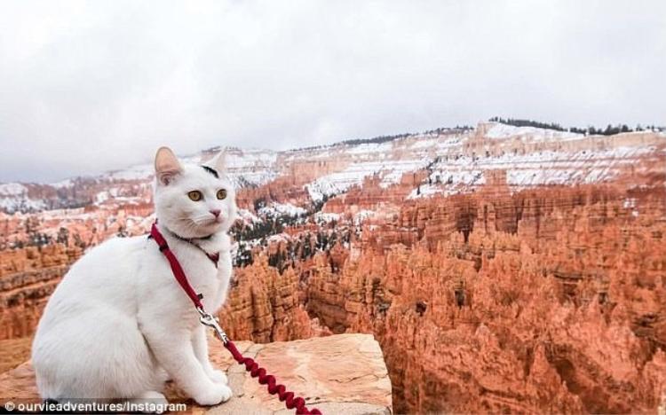 Vladimir đang nhìn ra Vườn Quốc gia Bryce Canyon ở Utah.