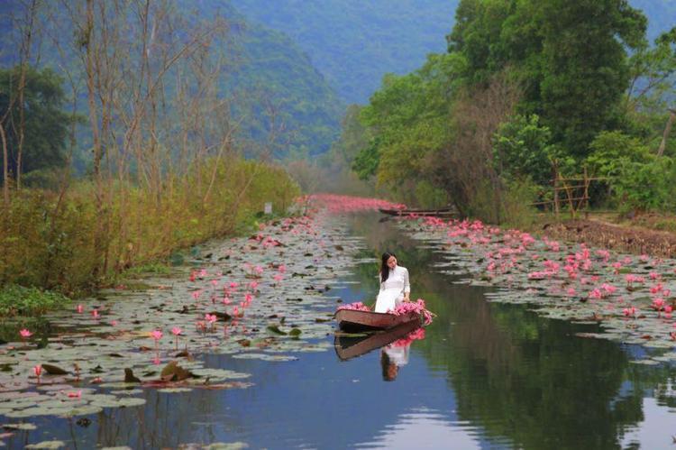 Sương khói bảng lảng và sắc hoa súng rực rỡ trong mùa thu. Ảnh Nguyễn Giang.