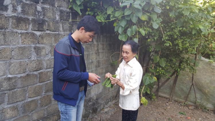 Ngoài khai thác tự nhiên, lá ngón không độc còn được nhiều người dân trồng trong vườn. Ảnh: Người đưa tin.
