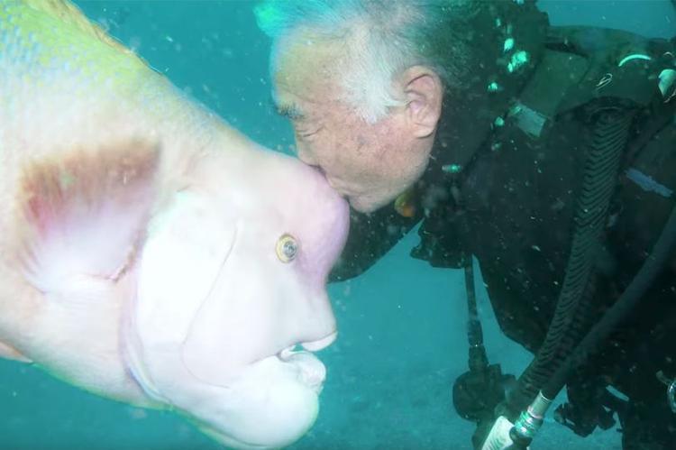 Suốt 30 năm, người thợ lặn già vẫn đều đặn về đại dương thăm nàng cá xấu xí