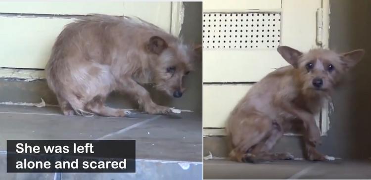 Chú chó bị bỏ rơi và trông rất sợ hãi