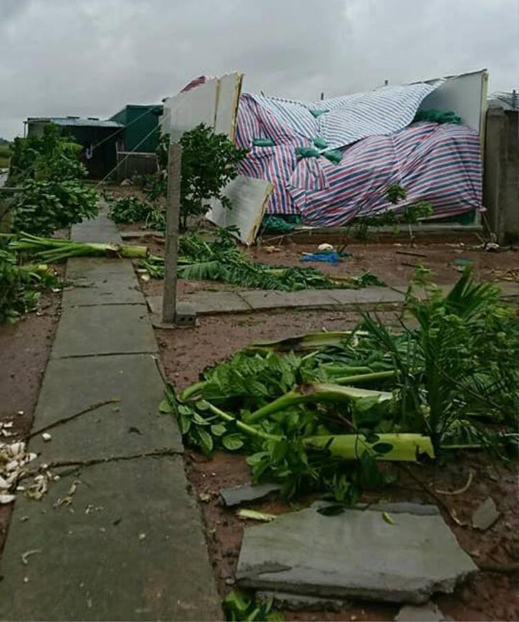 Nhiều cây cối bị gãy đổ.