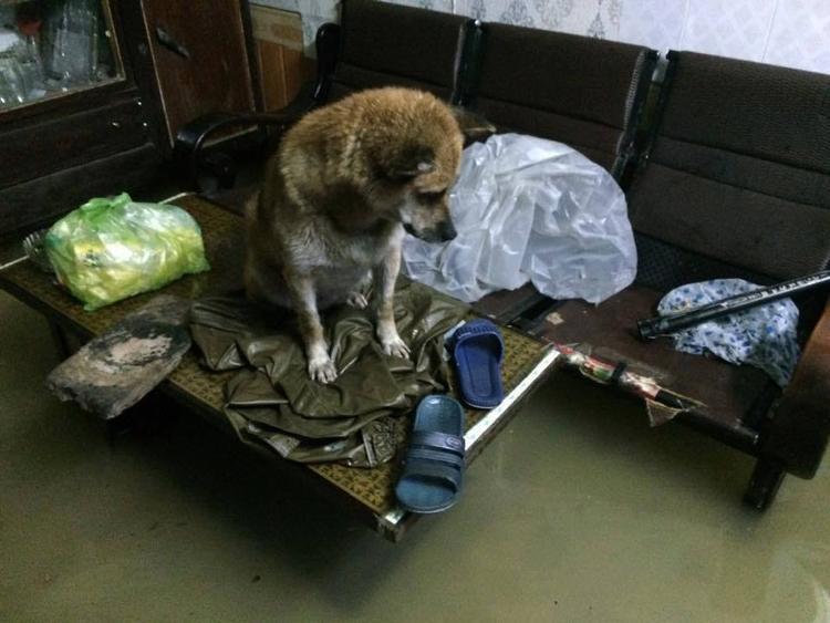 Khắp sàn nhà đều là nước, chú chó này đành ngồi tạm trên bàn - (Ảnh: Facebook)