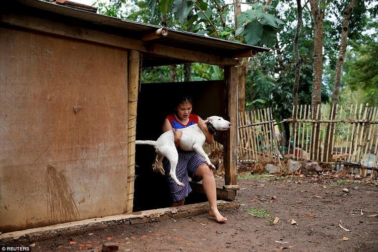 Nhà Badud đang nuôi 40 con chó. Anh phải trả từ 15 đến 150 USD tùy thuộc vào kích cỡ của từng con để được quyền tham gia cuộc đấu.