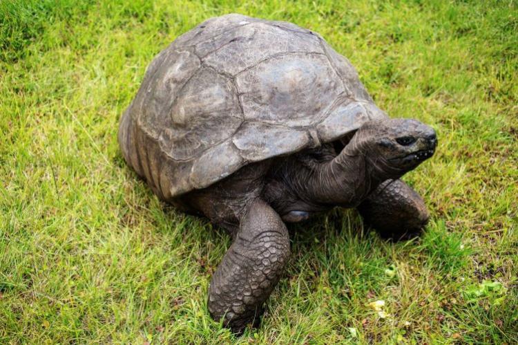 Jonathan, cụ rùa cao tuổi nhất thế giới mới tiết lộ mình là gay.