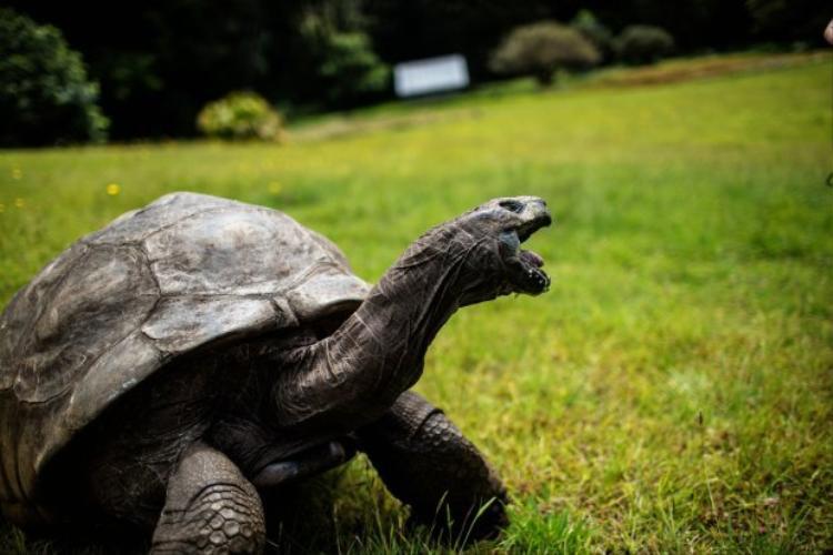 Phần lớn cuộc đời đều ở bên cạnh bạn đời là Frederica, nhưng suốt chừng ấy năm qua rùa Jonathan chưa hề có con.