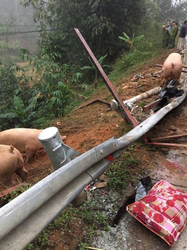 Hình ảnh đàn lợn ra khỏi xe tải.