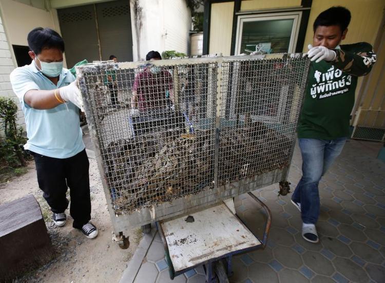 Trong năm 2017, Cục Quản lý đô thị Bangkok đã xử lý khoảng hơn 10.000 tấn rác mỗi ngày. Chính quyền thành phố cũng khẳng định, số lượng rắn bị bắt tại nhà đã tăng lên theo cấp số nhân trong những năm gần đây, họ phải phóng thích hàng trăm con rắn mỗi tuần.