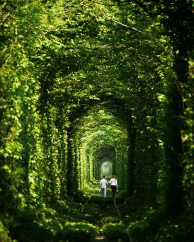 19. Đường hầm tình yêu, Kleven, Ukraine: Đường hầm dài khoảng 3 km này thực chất là một phần của một tuyến đường sắt tư nhân, chuyên chở gỗ đến một nhà máy tơ sợi ở gần đó.