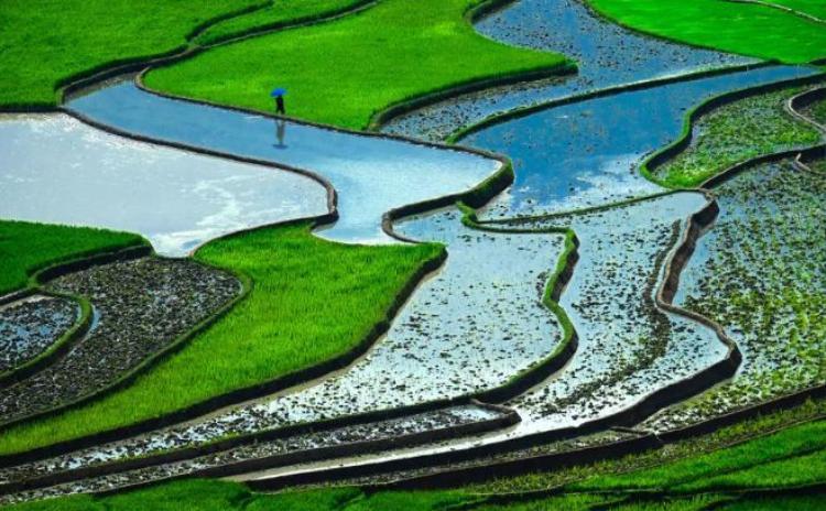 6. Ruộng bậc thang, Việt Nam: Những cánh đồng ruộng này ở Việt Nam tạo nên một trong những phong cảnh lạ mắt với nhiều sắc xanh ấn tượng. Đây cũng là một trong những quốc gia xuất khẩu gạo nhiều nhất thế giới.