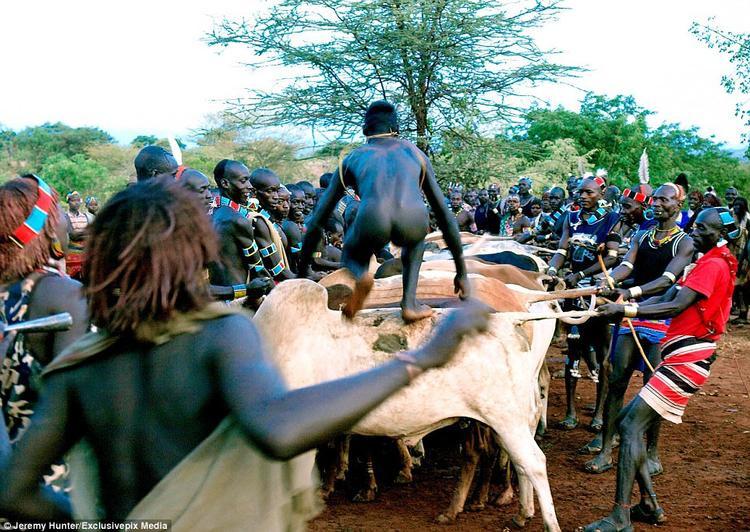 Sau khi nhảy lên lưng bò, các chàng trai phải đi trên 15 con bò trong tình trạng khỏa thân và không được phép ngã. Aivượt qua ải này được gọi là Maza và có quyền lấy vợ.