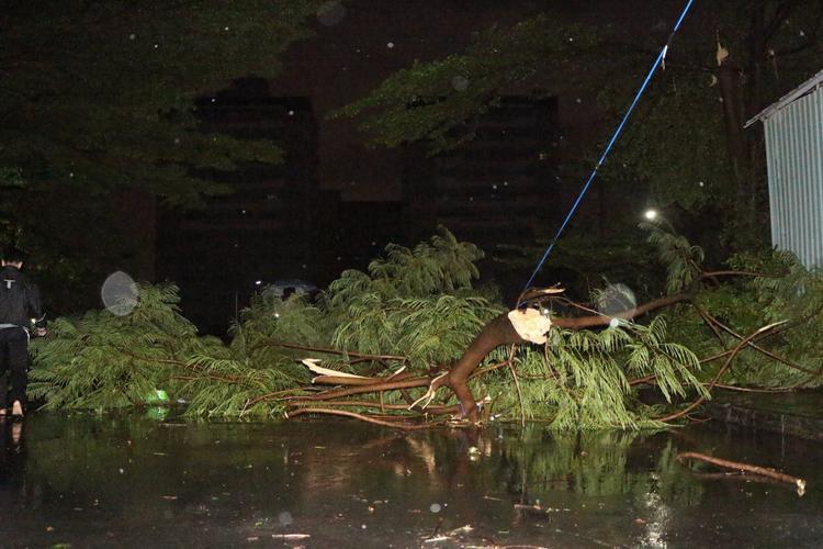Cây cối trong khuôn viên KTX cũng bị gió mạnh quật ngã, nằm ngổn ngang.