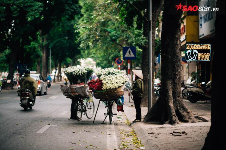 Tháng 11, phố phường Hà Nội lại ngập tràn những bông cúc họa mi bé nhỏ, trắng muốt.