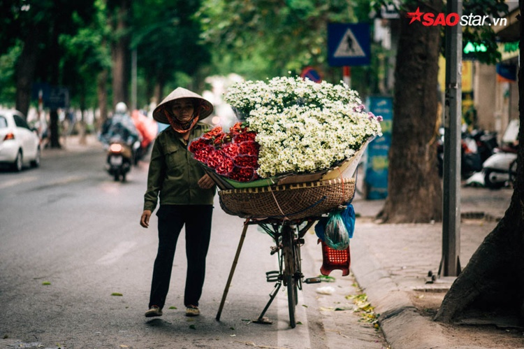 Hoa cúc nhỏ lấn át những loại hoa khác.