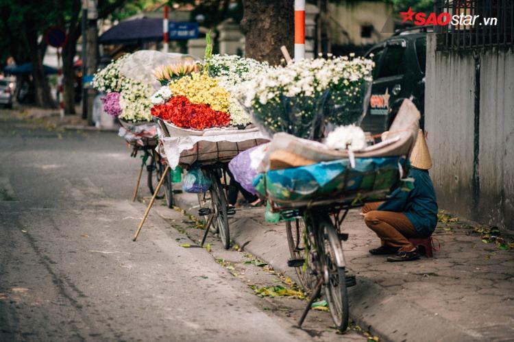 Họa mi được người bán hàng rong dùng xe đạp chở đi khắp phố.