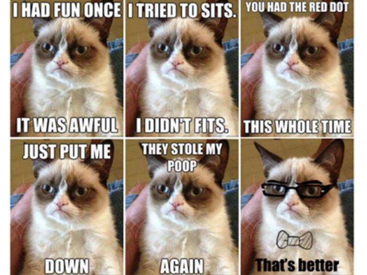 Đối với những người yêu mèo, hình ảnh cô mèo cau có này có lẽ là một trong những meme mà họ yêu thích nhất. Cô mèo này có tên Tard.