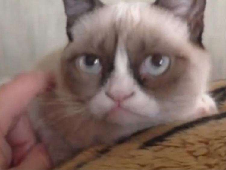 Tấm hình đầu tiên của Tard được đăng lên bởi anh trai chủ nhân của cô mèo này. Đây là ảnh chụp màn hình video lần đầu tiên Tard xuất hiện trên Internet.