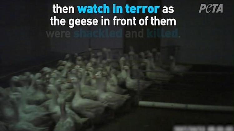 PETA kêu gọi mọi người không sử dụng các sản phẩm mang thương hiệu Canada Goose.