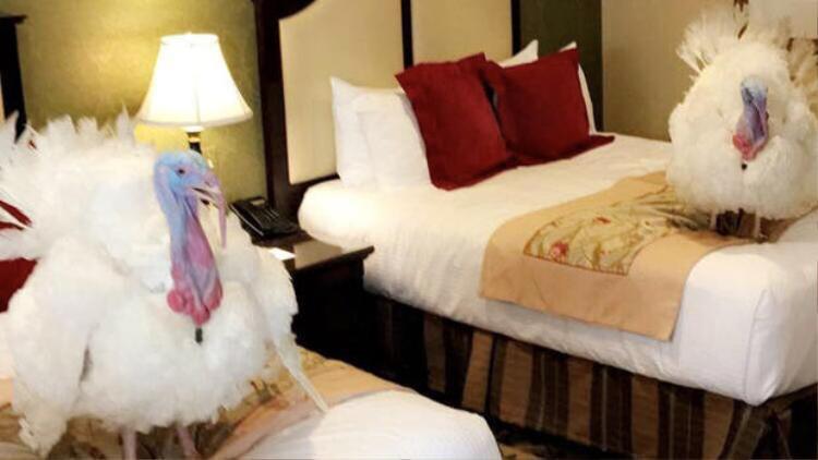 Hai con gà tây được đưa tới khách sạn một ngày trước lễ xá tội.