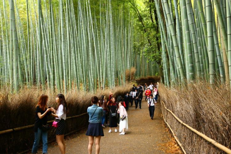 6. Rừng tre Sagano, Arashiyama:Khu vườn tre dài 200 mét là một trong những khu rừng đẹp nhất thế giới. Rừng mê hoặc du khách bởi vẻ đẹp của hàng triệu thân tre thẳng tắp, đứng sát nhau với âm thanh xào xạc. Tất cả tạo nên một dàn hợp xướng của lá cây trong không gian yên tĩnh. Cảnh sắc của rừng thay đổi khá rõ rệt theo ngày - đêm và theo mùa. Tham quan vào thời điểm khác nhau sẽ là một trải nghiệm mới lạ cho du khách.