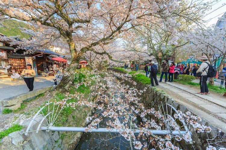 7. Con đường Triết gia - Philosopher:Philosopher là một con đường đi bộ bằng đá đẹp đi dọc hồ Biwa, nằm dưới chân núi Higashiyama. Con đường đi bộ đặc biệt nên thơ, sống động khi vào mùa hoa anh đào nở rộ hai bên bờ. Dọc khu vực này cũng có nhiều nhà hàng, nơi du khách có thể thử cà ri katsu, tham gia một buổi lễ trà,…