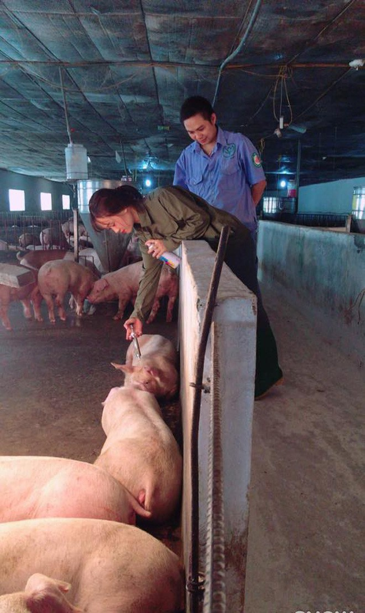 Hotgirl chăn lợn được cộng đồng mạng ưu ái vì quá can đảm