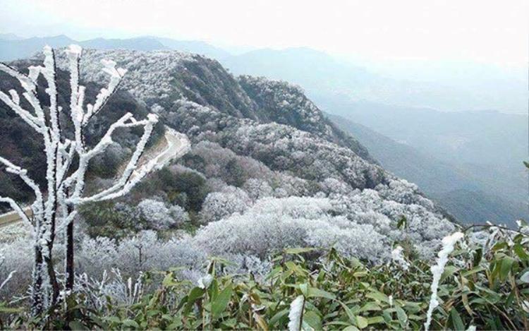 Đỉnh núi Phia Oắc ở Cao Bằng vào sáng ngày 24/11 phủ kín băng tuyết. Ảnh: S.N.Mai.